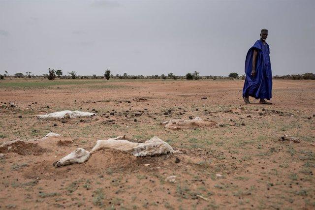 Sequía en Senegal