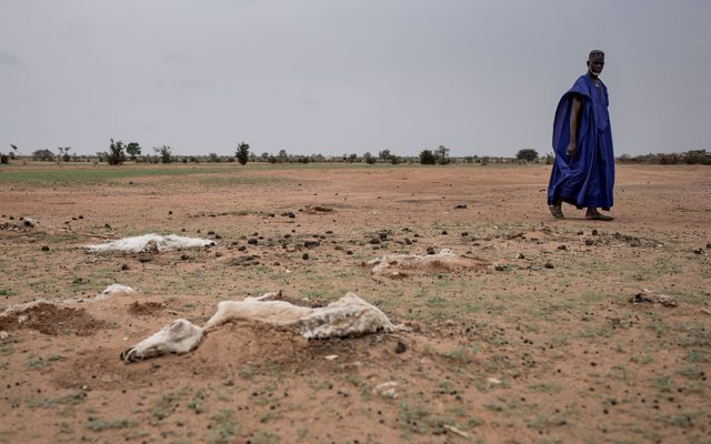 La tercera sequía en seis años deja sin comida a 245.000 personas en Senegal