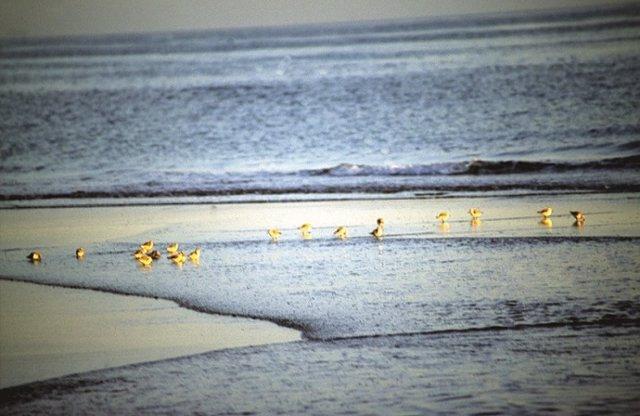 Turismo Ornitolóigico