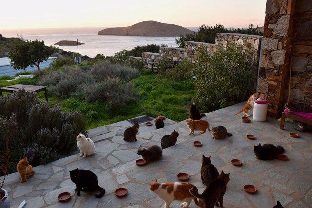 Isla en Grecia con 55 gatos