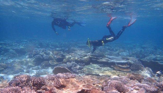 Arrecife de coral en las Islas Palau