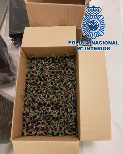 Sucesos.- Detenido un joven por transportar esquejes de marihuana en una furgoneta