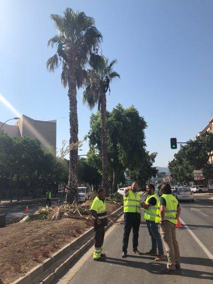 Ayuntamiento Murcia trabaja en la mejora estética de los accesos a la ciudad con motivo de la Feria de Murcia