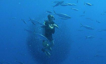 Un total de 16 buceadores sufren un percance en aguas de Canarias en lo que va de año