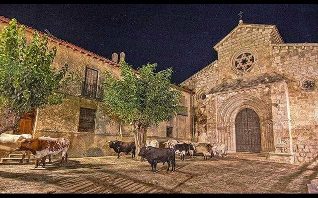 Brihuega celebra este jueves su tradicional encierro por el campo, uno de los más antiguos de España