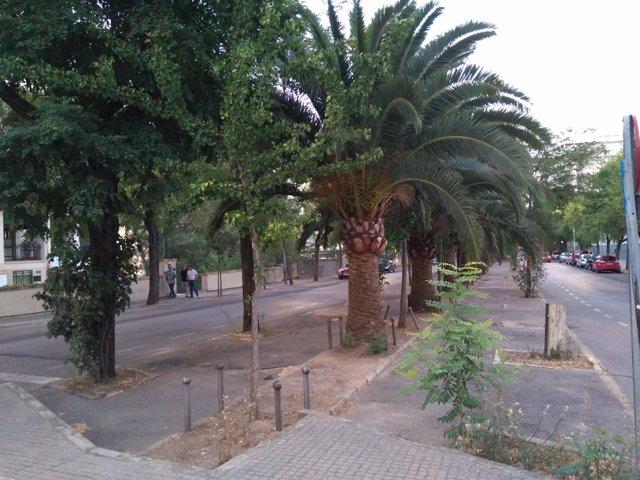 Avenida Virgen de Guadalupe de Cáceres