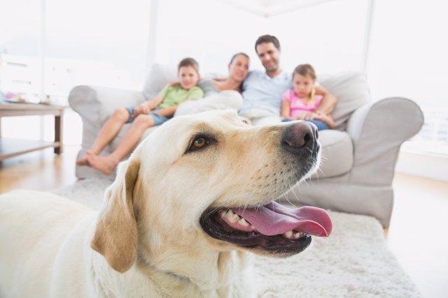 El perro sigue siendo la mascota preferida de los andaluces