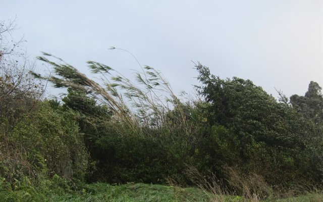La Aemet activa para este sábado la alerta amarilla por fuertes rachas de viento en Cádiz