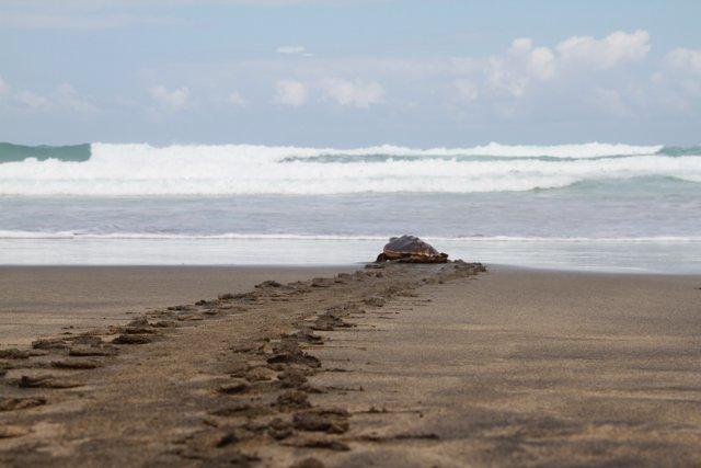 Suelta de tortugas en Fuerteventura