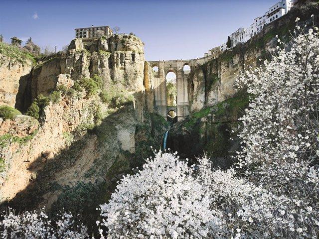Puente Nuevo de Ronda turismo ciudad del tajo almendros flor