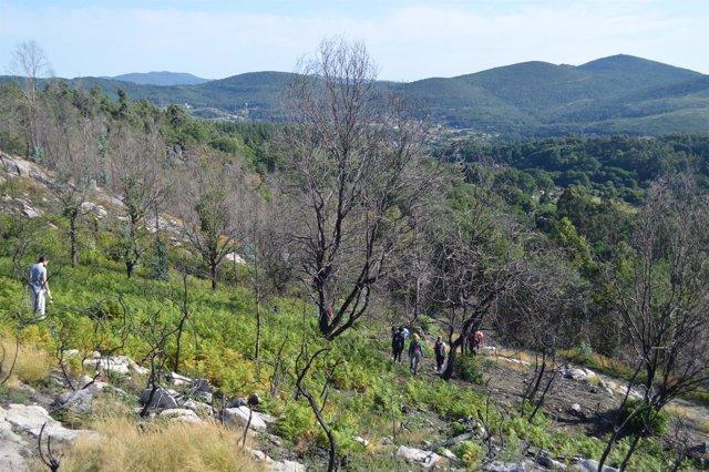 Montes Vecinales en Mano Común de Rebordelo