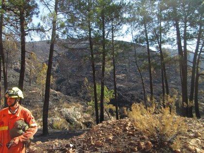 Cs pide que el ministro de Agricultura explique en el Congreso su actuación ante el incendio forestal de Llutxent