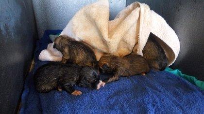 Policía de Ciudad Real rescata 8 cachorros de perro en la basura, 4 muertos, y busca al responsable