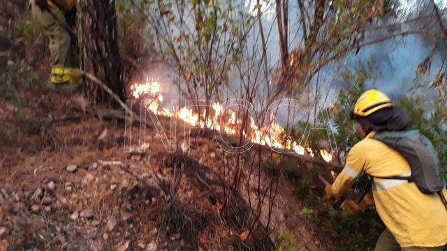 Controlado el incendio forestal en un paraje en Valverde del Camino