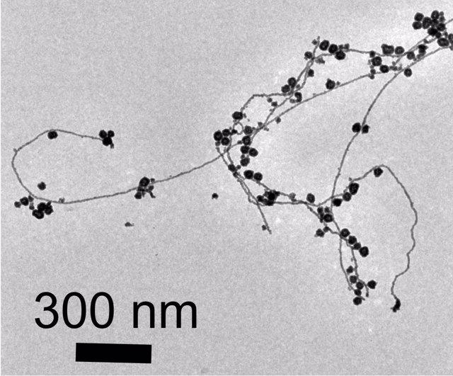 Nanpartículas de oro atadas a hilos de nanhilos de oro