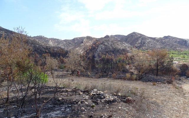 La Generalitat recibe 750.000 € del Gobierno para restaurar zonas afectadas por el incendio de Llutxent