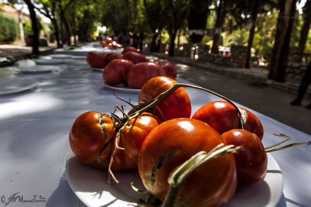 Fiesta del Tomate de Fontanar