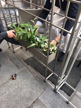 Nuevas jardineras en Plaza Mayor