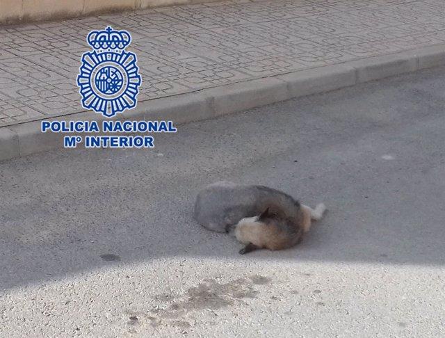 El animal atropellado en mitad de la calle, maltrato animal