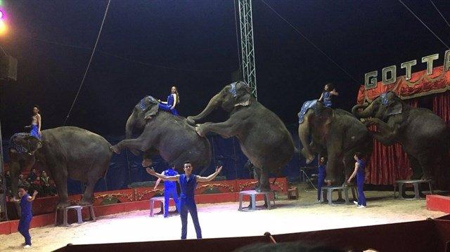 Circos Reunidos pide implementación certificado de calidad para animales