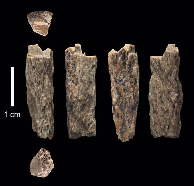 Fragmento de hueso encontrado en 2012 en la Cueva de Denisova