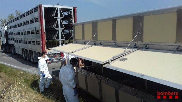 Un camión que transportaba 500 cerdos ha volcado en la C-241d en Montblanc