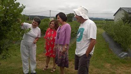 Álvarez destaca las expectativas de crecimiento del cultivo del arándano en Asturias