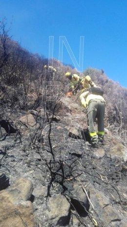 Incendio forestal en Tarifa