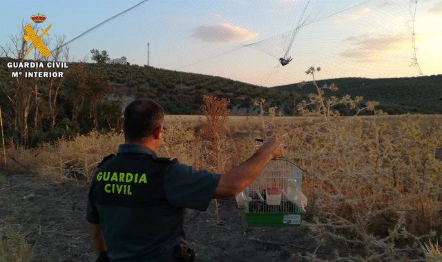 Detenido por captura ilegal de aves fringílidas