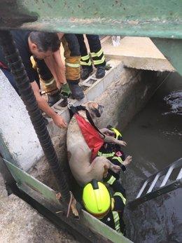 Rescate del perro en Orihuela