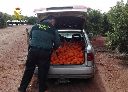 Los robos en el campo andaluz descienden casi un nueve por ciento