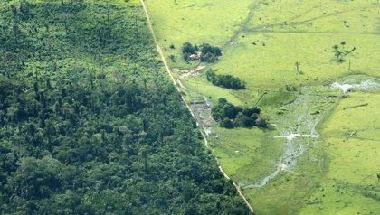 La ONU alerta de que en la lucha por el derecho a la tierra los activistas son retratados como criminales