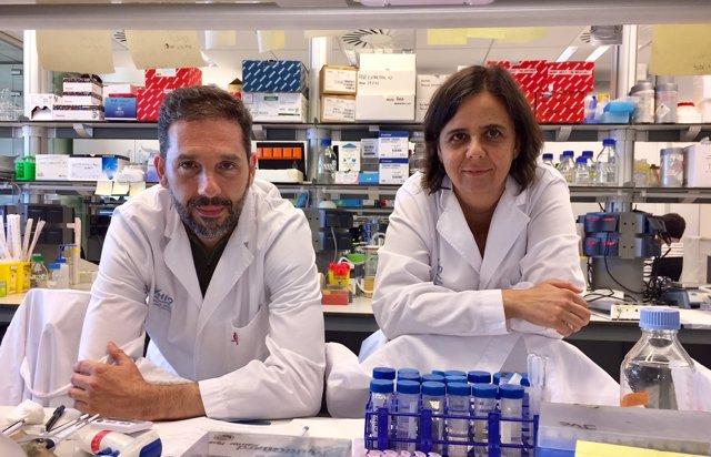 Investigadores descubren una nueva función de una proteína contra cáncer mama