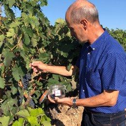 Control de maduración Rioja
