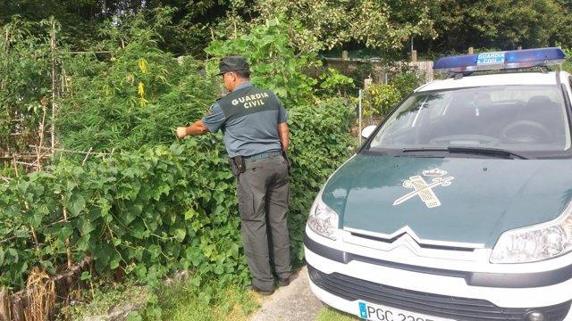 Investigado por cultivar marihuana en Gondomar