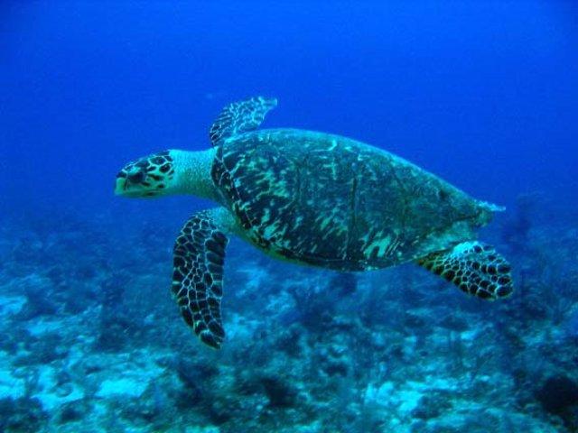 Maltrato a tortugas protegidas en Veracruz