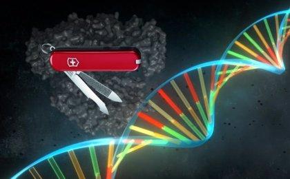 La edición genética ayuda a detener la progresión de la distrofia muscular Duchenne, según un estudio en perros