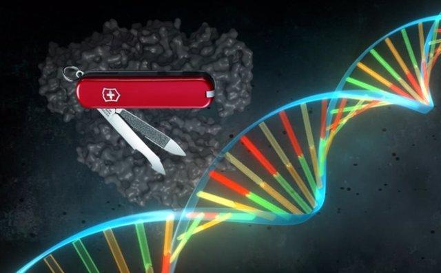 En-busca-de-la-navaja-suiza-de-CRISPR_