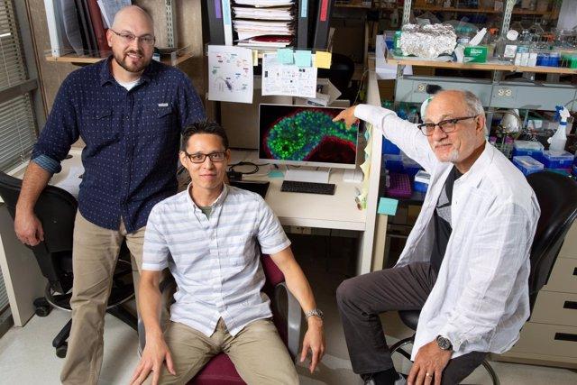 Científicos del Instituto Salk han identificado proteína clave en cáncer mama