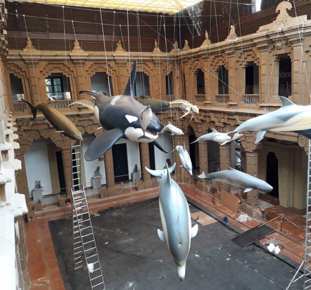 Colección La Mar de Cetáceos