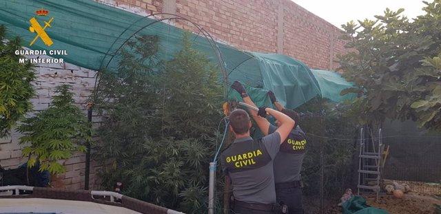 Agentes desmontan una de las plantaciones.