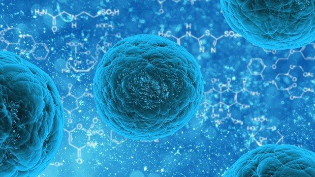 Célula, brote, bacteria