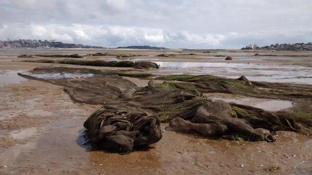 Mallas de protección retiradas de los parques de almejas en Santander