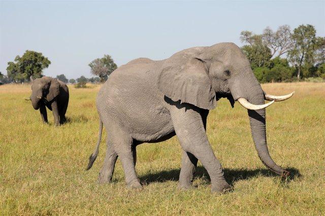 Un elefante en el parque del delta de Okavango, en Botsuana
