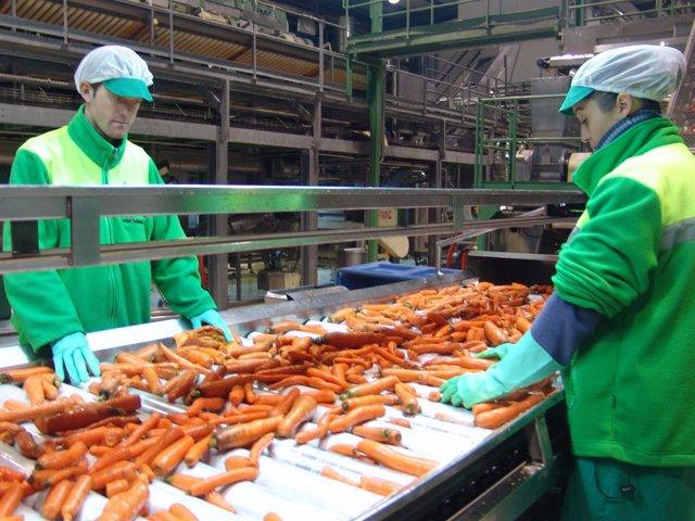 Imagen de Archivo. Trabajadores en una fábrica