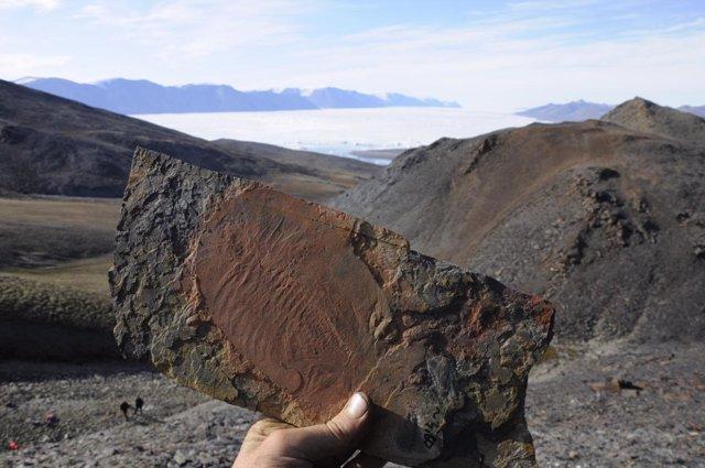 Fósil de trilobites