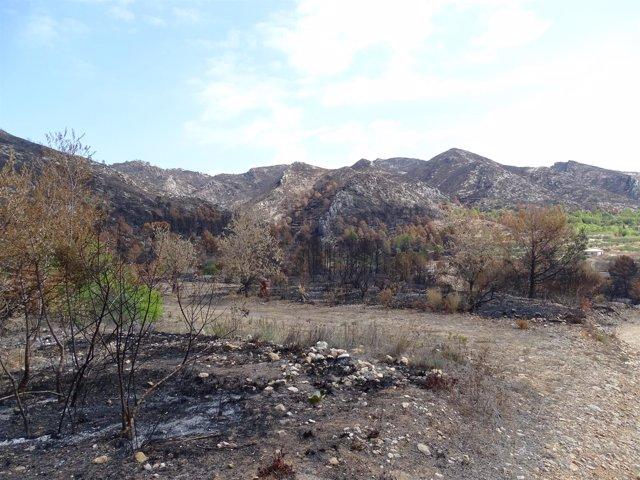 Zona afectada por el incendio de Llutxent
