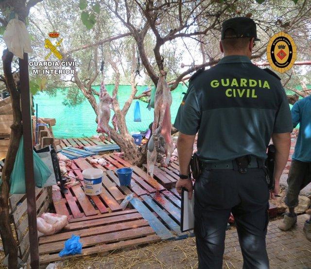 Desmantelan un matadero ilegal con 110 corderos en Constantí