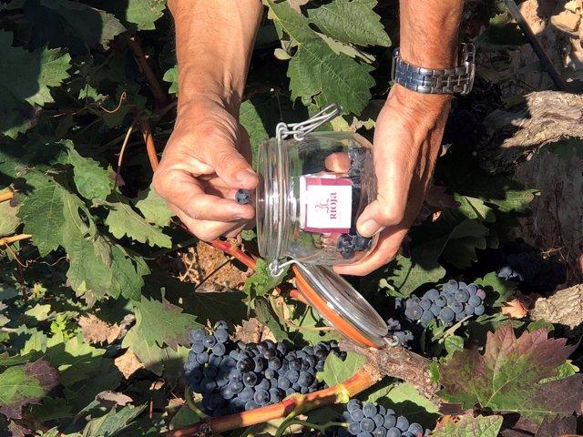 Toma de muestras para el control de maduración en el DOCa Rioja