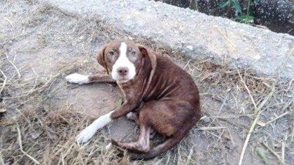 La familia de Francisco, el enfermo de Alzheimer que desapareció en Burriana, adopta a la perrita que cuidó de él